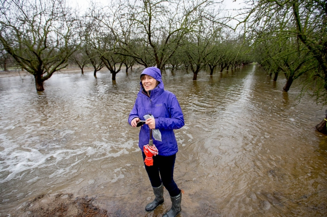 Integrated hydrologic science professor Helen Dahlke in an almond orchard being flooded for groundwater recharge. for Green Blog Blog