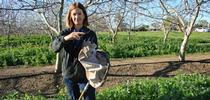 UCCE advisor Rachael Long holding a lacewing, a beneficial insect that feeds on aphids. She is standing in a cover crop in a walnut orchard. (Photo: California Farm Bureau) for Green Blog Blog