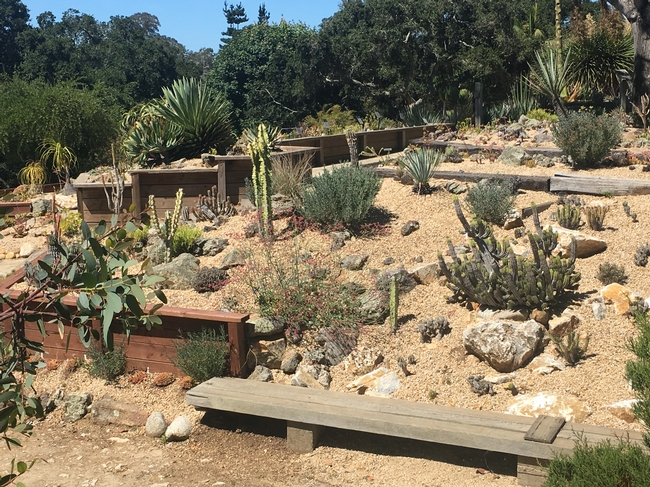 Most Californians don't have a desert landscape designed to withstand the limited water and high temps like the desert garden display at the UC Santa Cruz botanical garden. Photo credit: Lauren Snowden