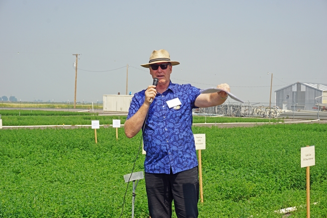 UC alfalfa specialist Dan Putnam said selecting the best alfalfa variety can result in up to $700 per acre increase in profit over five years. 'That can be pretty important economically,' Putnam said.