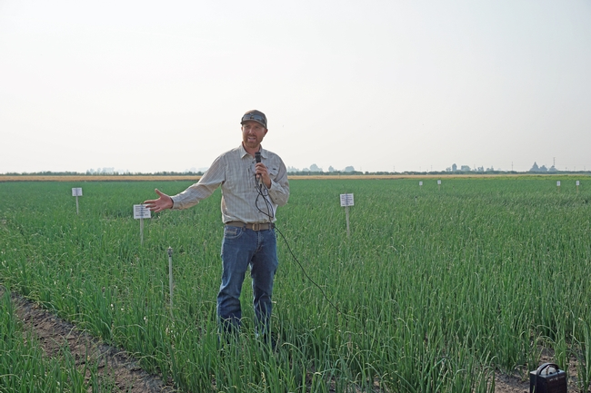 IREC director and farm advisor Rob Wilson describes efforts being made to suppress the onion disease white root rot. 'White root rot is a soil-borne disease that is long-lived in the soil,' he said. 'This has limited onion acreage in the area.'