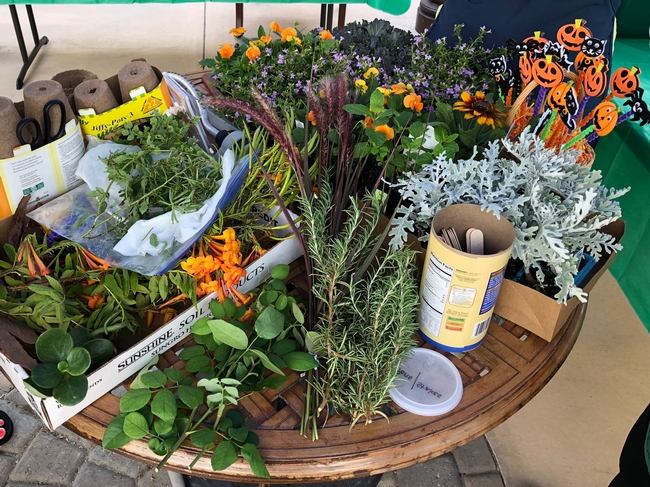 Participants constructed a simple potted plant with marigolds, chrysanthemums and mint varieties to adorn their spring celebration tables. Photo: Debbie Handal