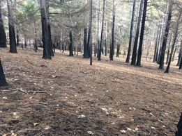 A well-maintained forested area in Paradise that had minimal tree mortality from the Camp Fire.