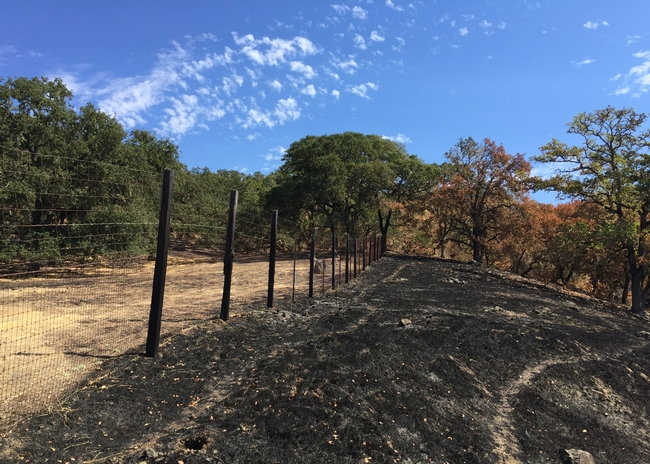 At Hopland Research & Extension Center, the River Fire burned right up to the fence line, stopping at the grazed pasture on left.
