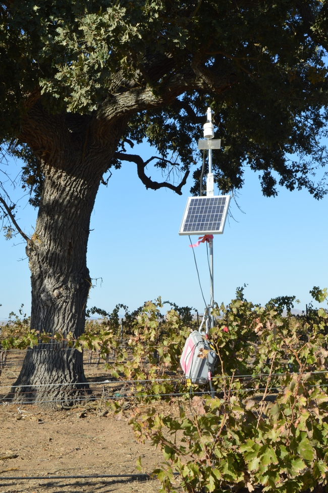 Bat echolocation recording device is solar-powered at a tree in a vineyard.