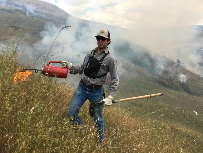 Shapero demonstrates prescribed burn. Since the Thomas Fire, prescribed fire has become more accepted as a technique to reduce vegetation and lessen the threat of catastrophic wildfire.