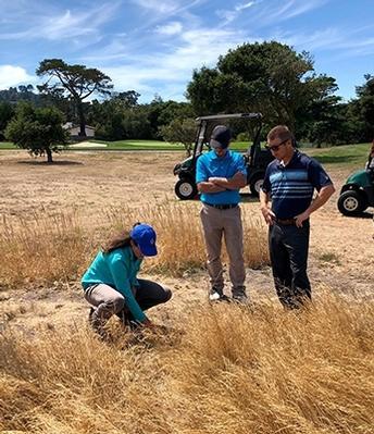 Golf courses go wild