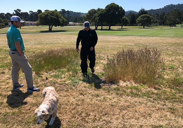 Golf course superintendent and assistant observe small research plot on a golf course in Monterey. Photo by Maggie Reiter