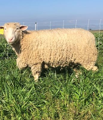 Does livestock grazing benefit organic crops?