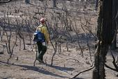 In some areas, the high-intensity Rim Fire burned all the vegetation. (Photo: USDA)
