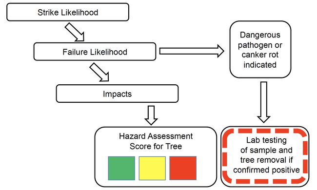 Evalutree's assessment process leads to a tree hazard rating.