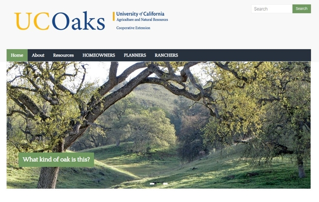 The UC Oaks website contains updated information for homeowners, land-use planners and ranchers to keep oak trees healthy.