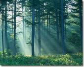 forest bio lg
