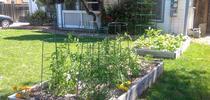 home garden for Green Blog Blog
