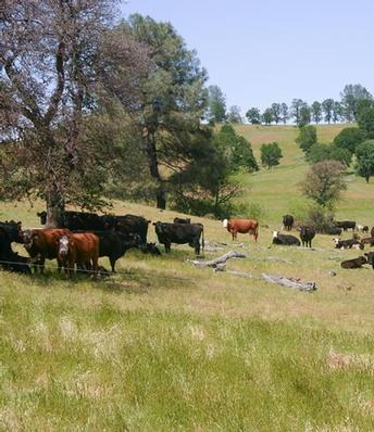 UC ANR releases new publication on annual rangeland