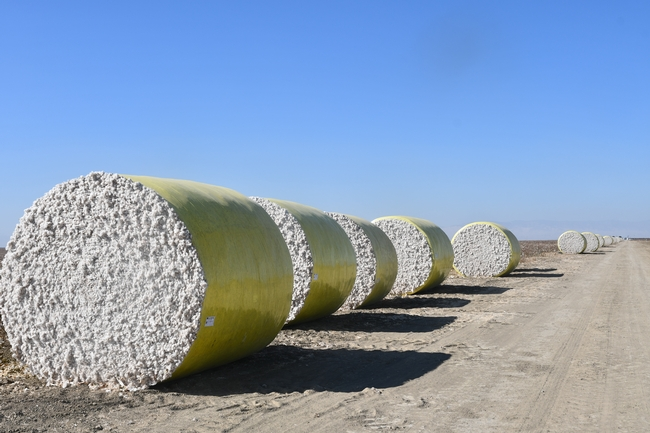 Bales of harvested cotton await their turn at the gin. (Photo: Jeff Mitchell)