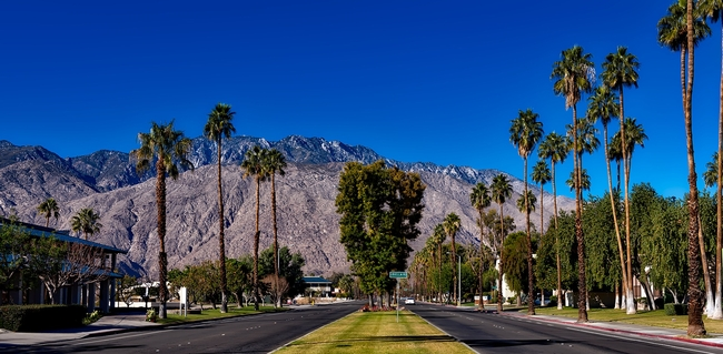 Trees beautify a boulevard in Palm Springs.