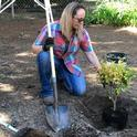 UCCE orchard and vineyard systems advisor Kari Arnold demonstrates proper tree planting. (Photo: Anne Schellman)