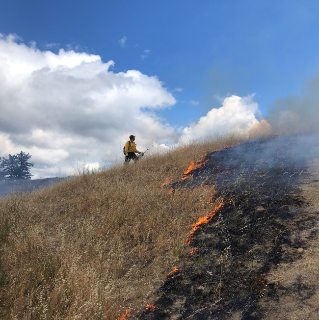 Humboldt County Prescribed Burn Association conducts Prescribed burning to reduce fuels and wildfire risk and to restore habitat, control invasive species, improve rangelands in June 2019. Photo by Lenya Quinn Davidson