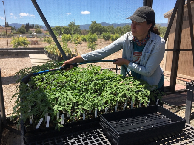 The cost of water may deter people from growing food in urban areas, says Lucy DiekmannUC Cooperative Extension urban agriculture and food systems advisor in Santa Clara County.