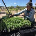 The cost of water may deter people from growing food in urban areas, says Lucy Diekmann, UC Cooperative Extension urban agriculture and food systems advisor in Santa Clara County.