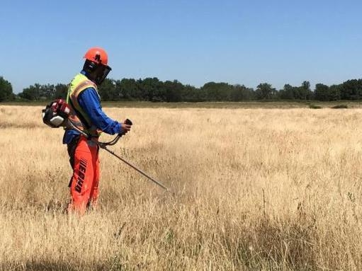 Knapweed control with a brush cutter. (Photo: Dawn Cunningham)