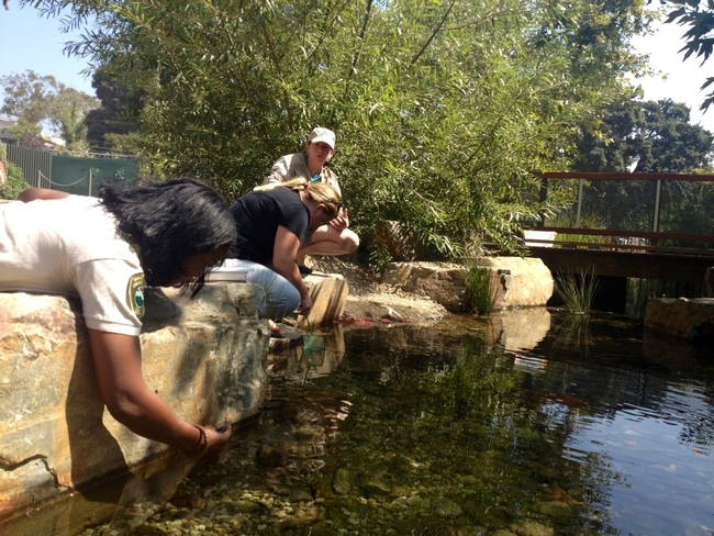 A constructed wetland at the Los Angeles County Natural History Museum provides habitat, removes pollutants and allows for groundwater recharge. It also provides an opportunity to learn about and connect with nature in the city. As two people lean over to touch the water, Sabrina Drill, shown squatting beside them, describes aquatic ecosystems.