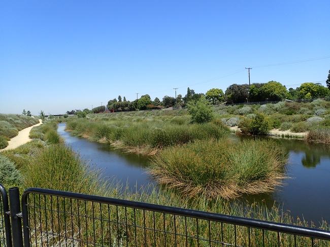 Water surrounds an island of tall green grass under a blue sky.