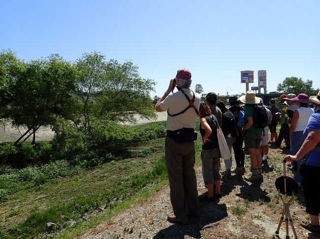 About a dozen people look over a creek. Water not shown, just green vegetation bordering the creek.