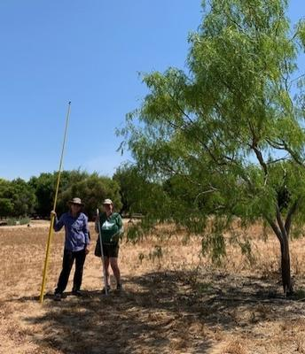 The importance of trees to cool urban heat islands