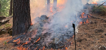 Prescribed burn conducted in the Sierra Nevada during a University of California Cooperative Extension prescribed fire workshop in November 2019. Photo by Susie Kocher. for Green Blog Blog