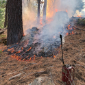 Prescribed burn conducted in the Sierra Nevada during a University of California Cooperative Extension prescribed fire workshop in November 2019. Photo by Susie Kocher.