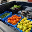 Produce from UC HAREC was donated to the community