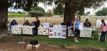 Dog Sports for Hansen News Blog