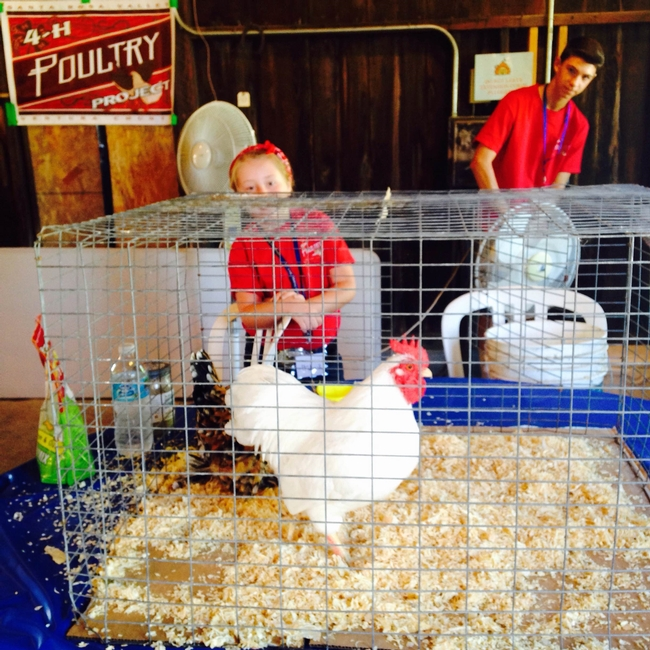4-H Poultry demonstrations in the Large Barn