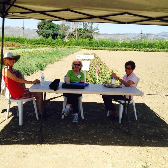 Beet harvest area, Master Gardeners rest between groups of visitors