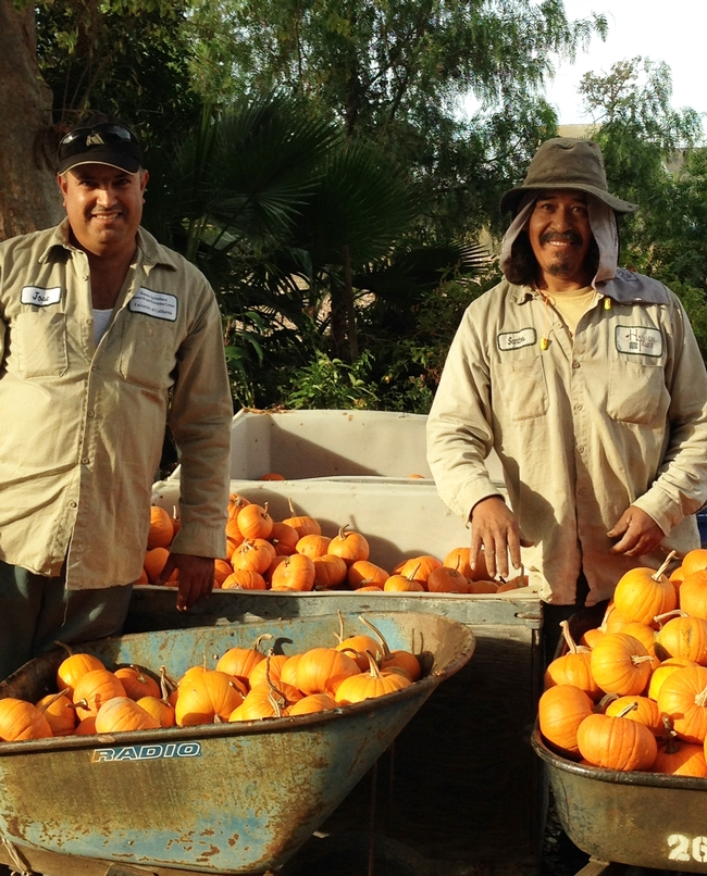 Thank you to staff Jose Hernandez Alvarez and Santos Rodriguez Ramirez that devote so much time caring for the field trip harvest gardens.
