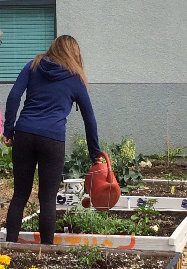 students wander in and out of garden during lunch time to water and tend to plants