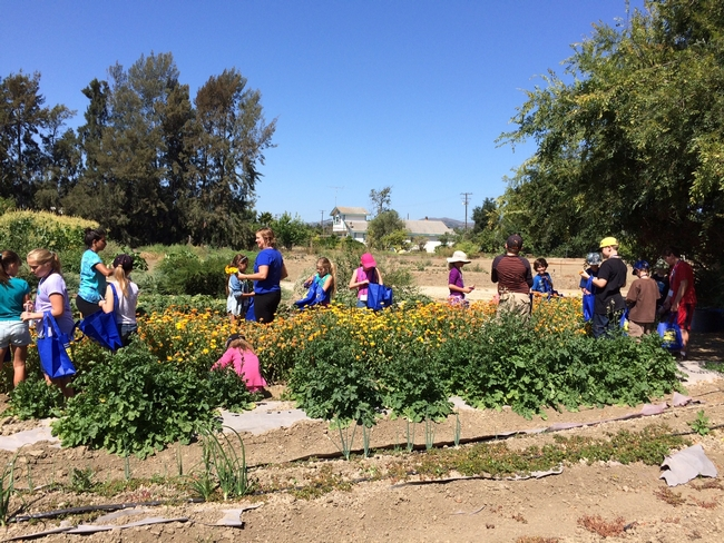 Touring the native plants hedge row in the student farm