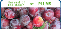 Plums for Healthy Central Sierra Blog