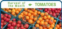Tomatoes July for Healthy Central Sierra Blog