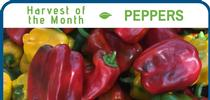 Peppers August for Healthy Central Sierra Blog