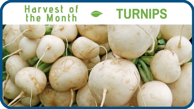 Turnips December