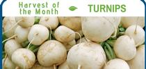 Turnips December for Healthy Central Sierra Blog