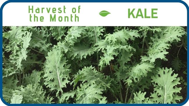 Kale January