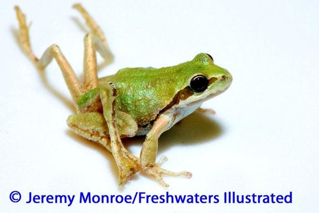 Frog Monroe photo