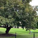 Well Maintained Park Tree