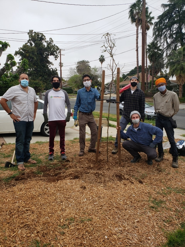 Master Gardeners, community volunteers help plant recommended drought, heat, and pest and disease resistant trees