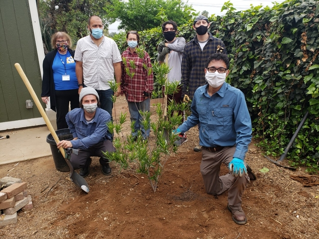 volunteers and fellows and tree recipients in redlands