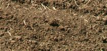 Biotic soil resulting from conservation agriculture practices. for Kearney news updates Blog